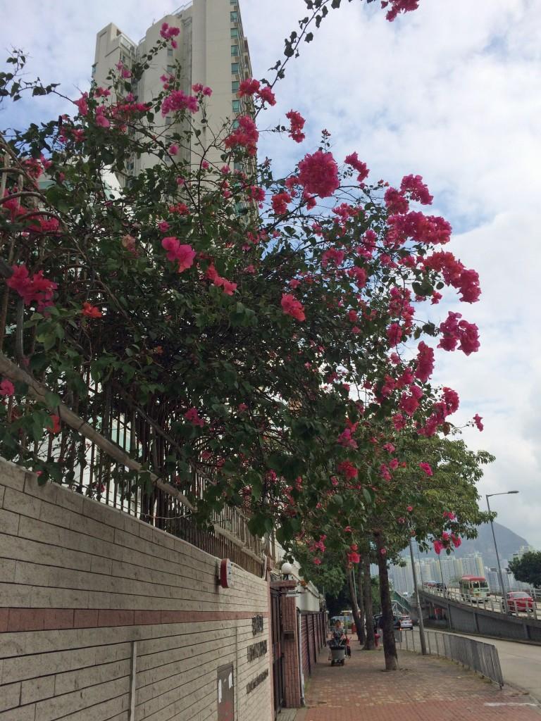 Argyle Street flowers