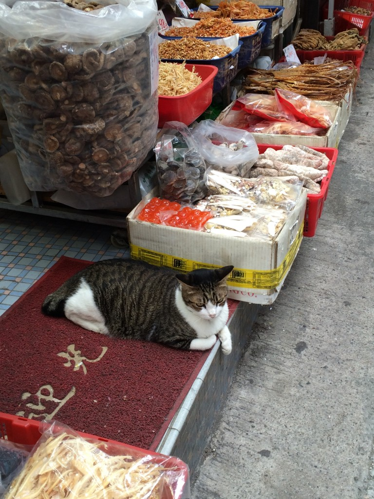 Cat in a dry goods store
